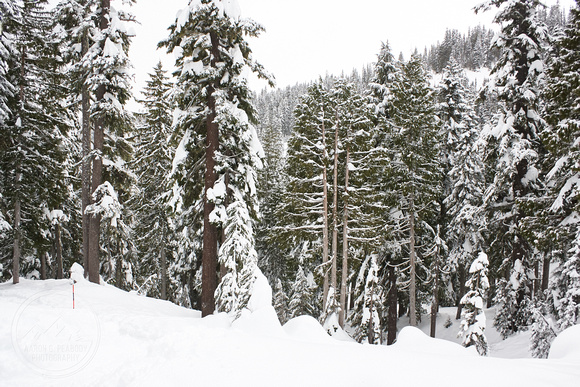 Reflection Lake Snowshoe 2016-12-23 _MG_9042